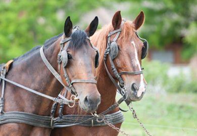 Blinkered horses