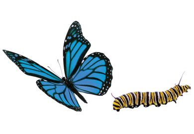 Blue butterfly and caterpillar