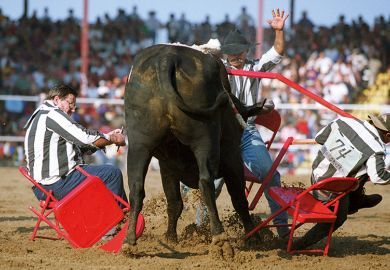A bull at a rodeo