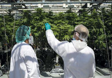 Cannabis farm Mississippi