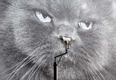cat-camera