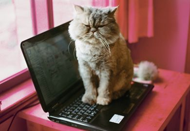 cat sitting on laptop