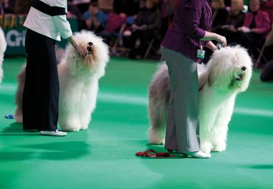 competitors at dog show