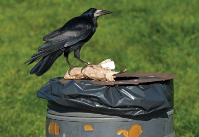Crow standing on top of park dustbin