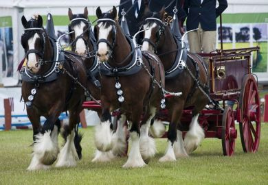 Clydesdales and pulling a cart