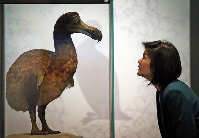 Dodo in glass case