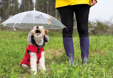 Research on opinions of academics produces metaphors such as 'fox terrier', similar to the dog sitting under an umbrella in a red jacket