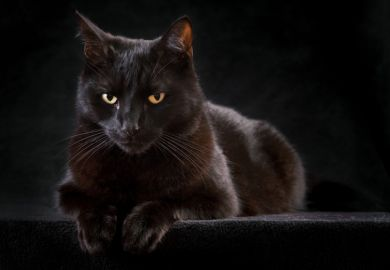 A black cat staring straight ahead