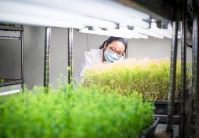 Female scientist examine transgenic plants in the growth chamber