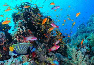 Fish in Red Sea coral reef