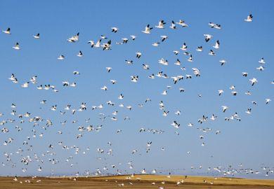 Flock of seagulls flying against blue sky