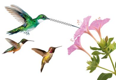 Flying hummingbirds feeding on nectar from flower