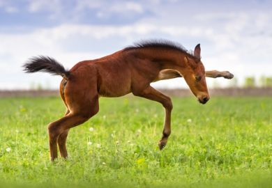 A foal in a field