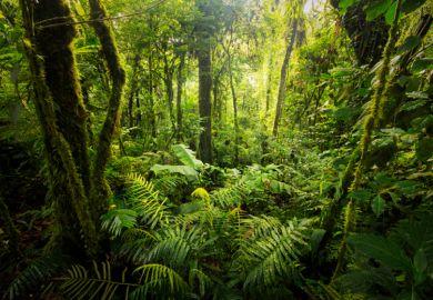 Forest in Costa Rica