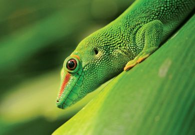 Green lizard sitting on plant