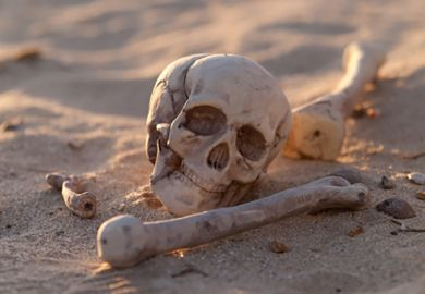 A skull and other human bones