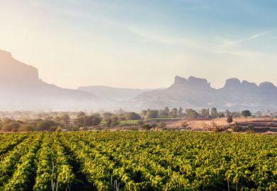 Indian vineyards