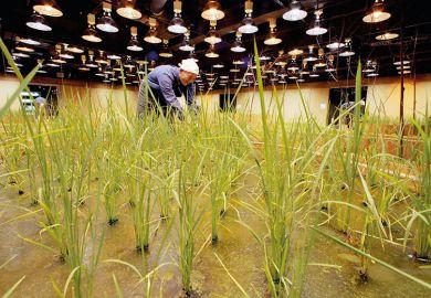 indoor-crops