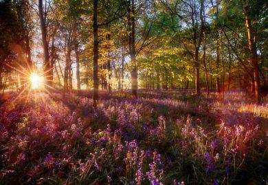 Sunrise over woodland