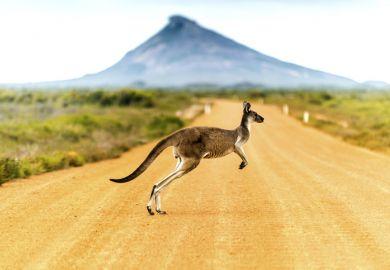 Australia bush kangaroo scrub outback desert