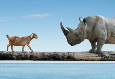 Goat and a rhino on a bridge