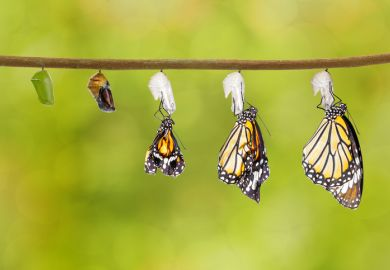 Butterflies emerge from their chrysalises