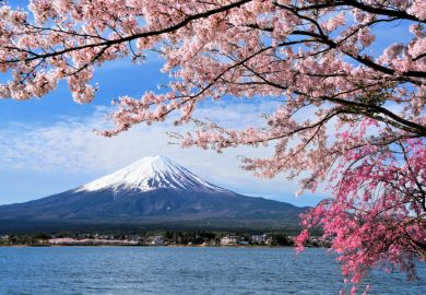 Mount Fuji and cherry tree, Japan