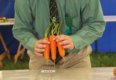 Man grading/judging carrots, Muker Agricultural Show, England