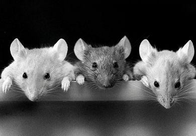 three mice