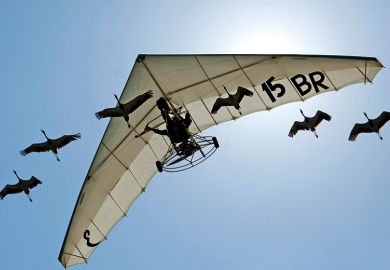 Microlight pilot flies with flock of cranes