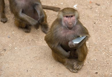 monkey holding phone