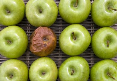 One bad apple - one rotten apple in a group of a dozen apples.