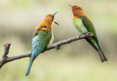 Image of a pair of birds on a tree branch as a symbol for international students at university branch campuses
