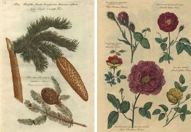 Plant drawings