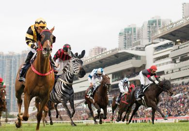 zebra in horse race