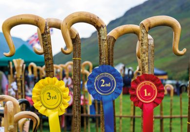 Row of prize-winning shepherds crooks and rosettes