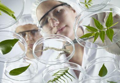 Scientists examine petri dishes