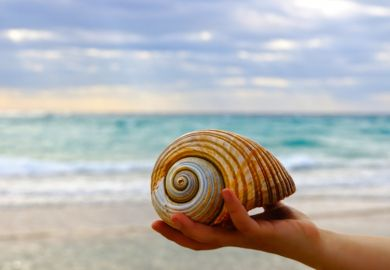 Hand holding shell