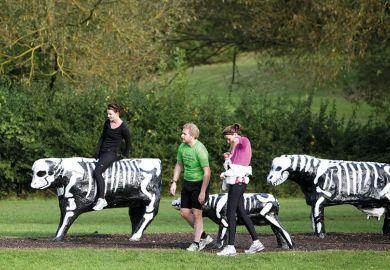 skeleton-cows