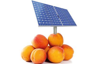 Solar panel in peaches