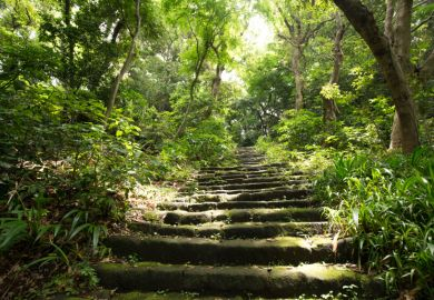 Stairs in a forest