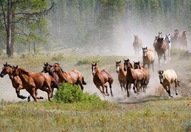 A stampede of horses