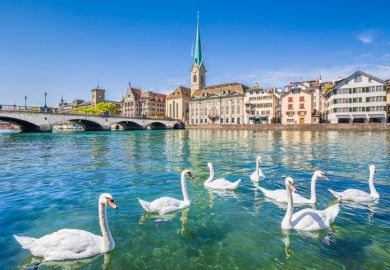 Swans on river Limmat, Zurich, Switzerland