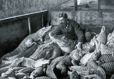 Man with alligators