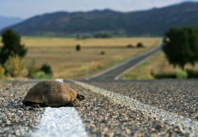 Tortoise slow