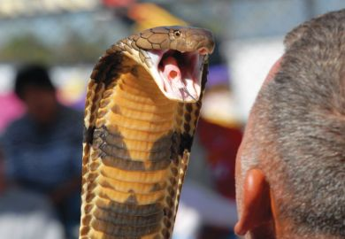 Snake with mouth open wide near mans head as a metaphor for oise State committed to diversity despite political 'venom'