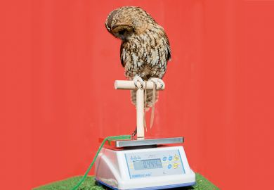 Weighing an owl