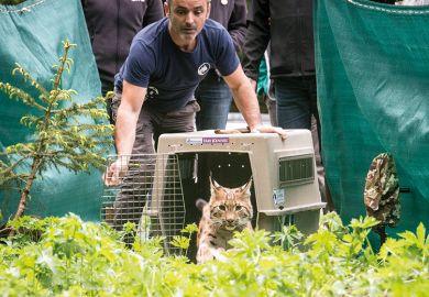 wild-cat-set-free