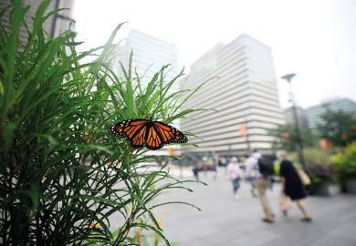 Monarch butterfly in city
