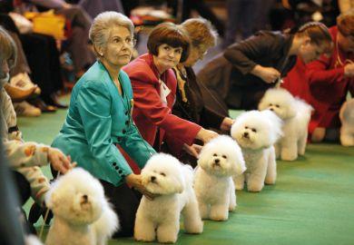 Women attending a dog show